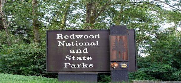 macOS redwood-rumor